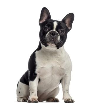 Lire la suite: La dermatite atopique chez le chien