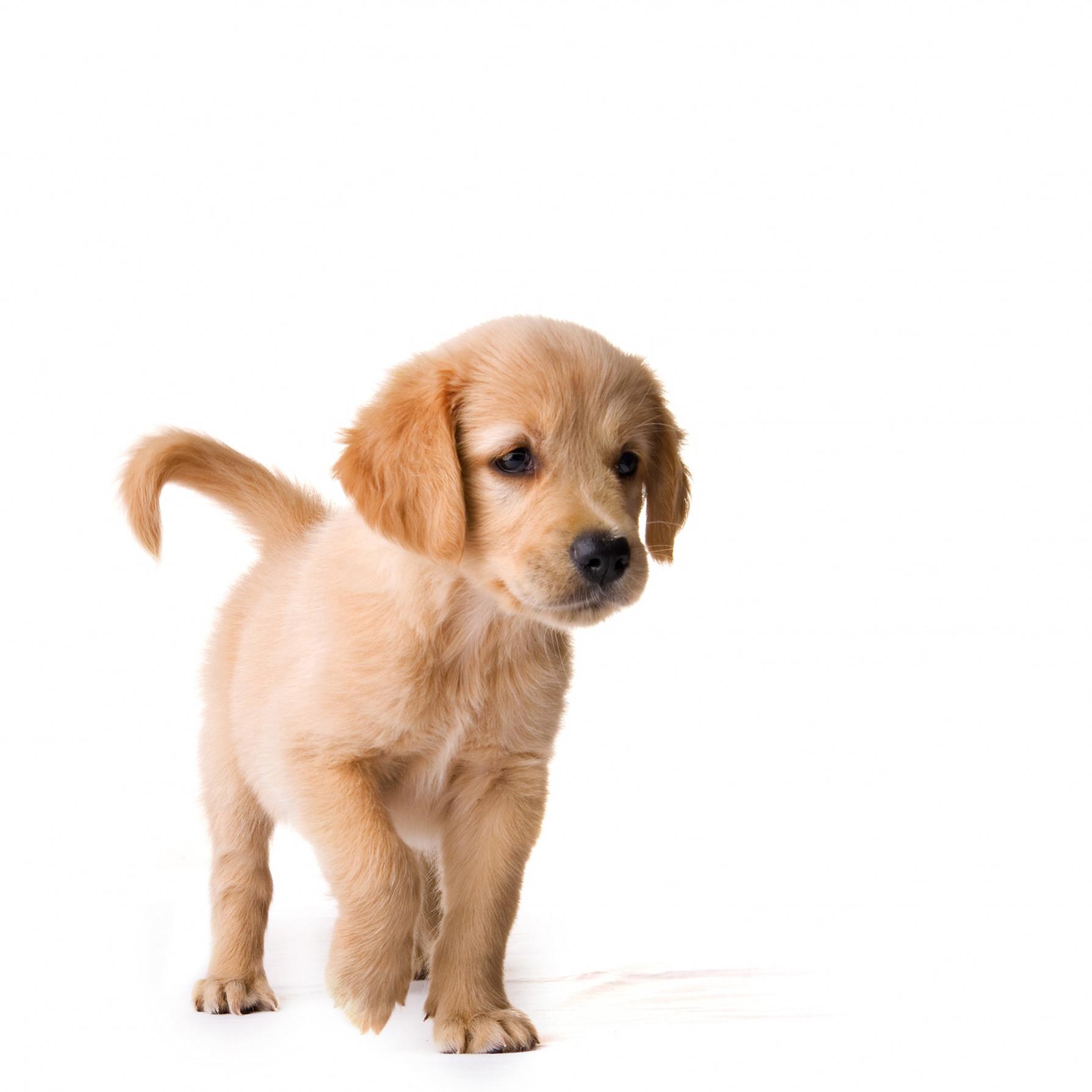 Lire la suite: Les boiteries chez le chien