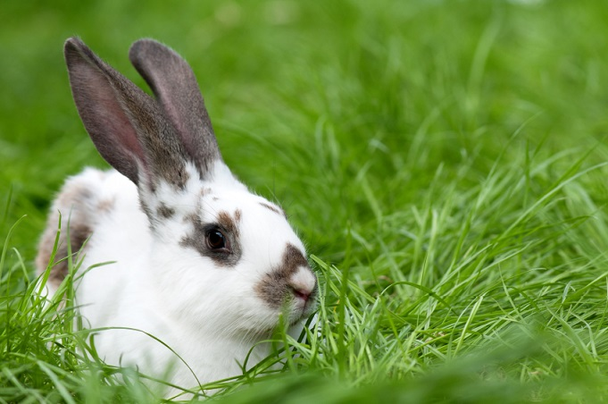 Dernières recommandations pour l'alimentation du lapin
