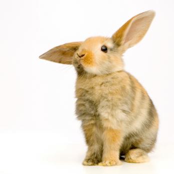 Lire la suite: La stérilisation de la lapine