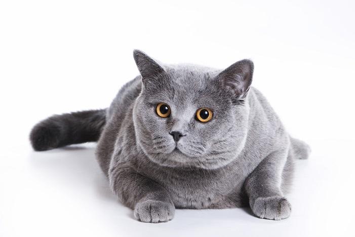 Le chat bouché