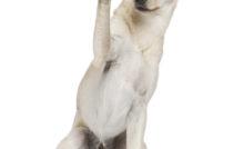 Lire la suite: Le métier d'éducateur canin