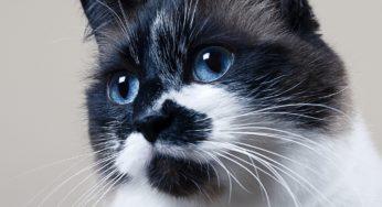 Lire la suite: La dépression chez le chat