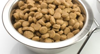 Conservation des aliments pour chien et chat