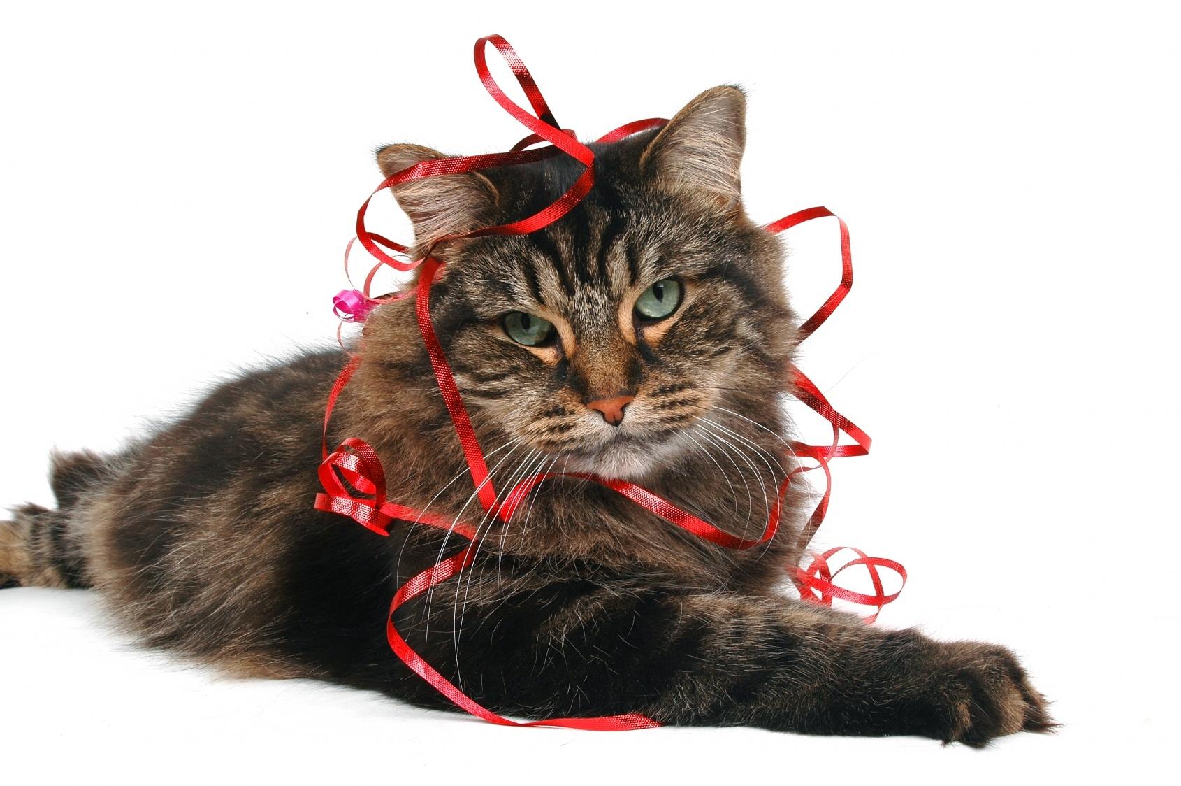Lire la suite: Mon chat vomit