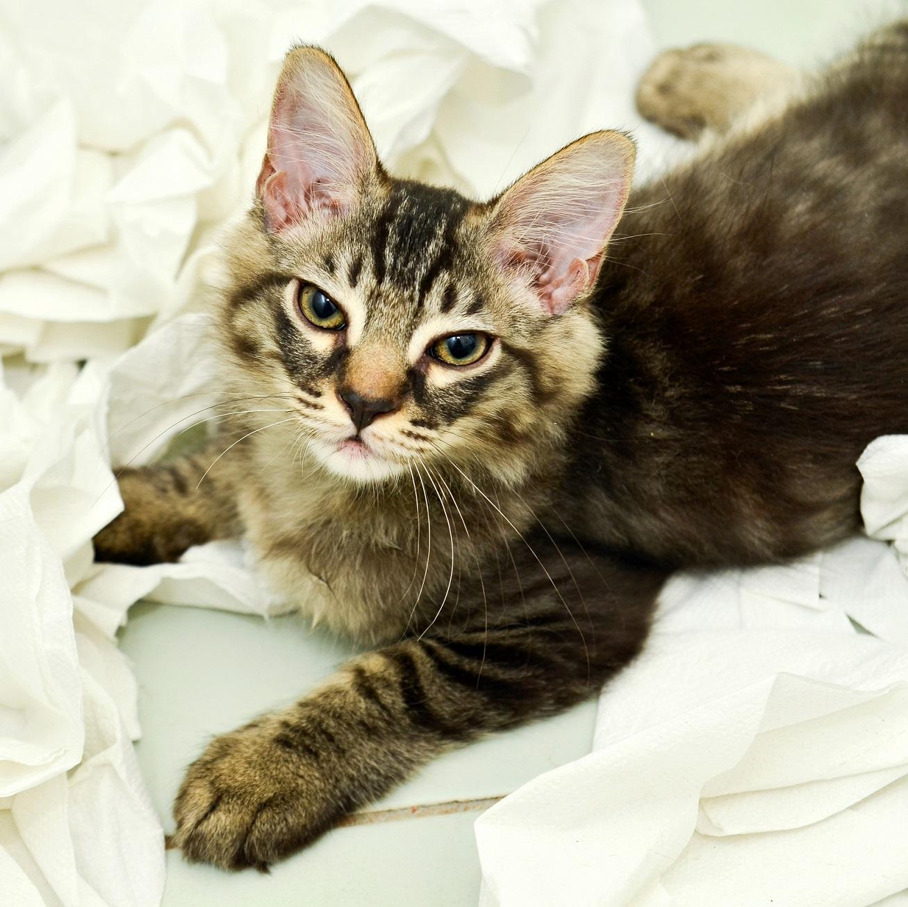 Lire la suite: Mon chat éternue