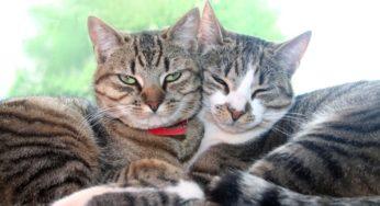 Arrivée du chaton et cohabitation avec les autres animaux