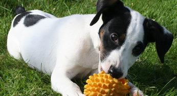 Lire la suite: Mon chien fait des trous dans le jardin
