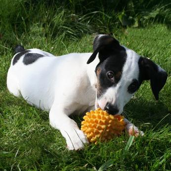 mon chien fait des trous dans le jardin comportement du chien education chiens. Black Bedroom Furniture Sets. Home Design Ideas