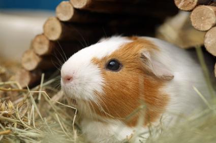 Lire la suite: Comment savoir si mon rongeur ou mon lapin est malade ?