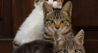 Croissance du chaton