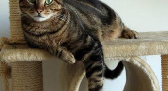 Lire la suite: Comment choisir un arbre à chat ?