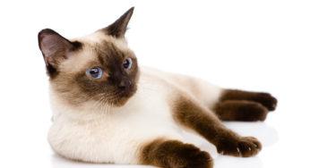 Lire la suite: Les MICI chez le chat
