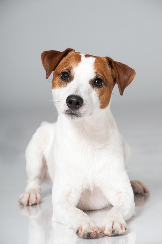 Bekannt L'incontinence urinaire chez le chien - Pathologies rénales et  HB05