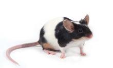 Présentation de la souris