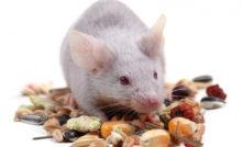 Lire la suite: L'alimentation de la souris en pratique