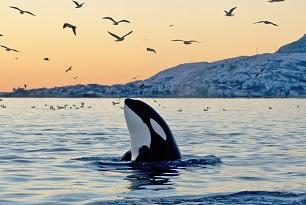 Lire la suite: Le top 5 des animaux stars