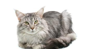 Lire la suite: Les allergies chez le chat