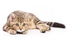 Lire la suite: Mon chat me réveille la nuit, que faire ?