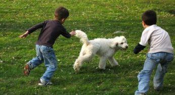 Activités en plein air avec son chien