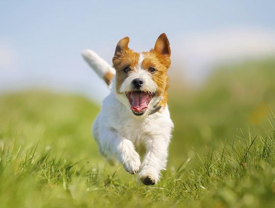 Conseils pour lâcher son chien