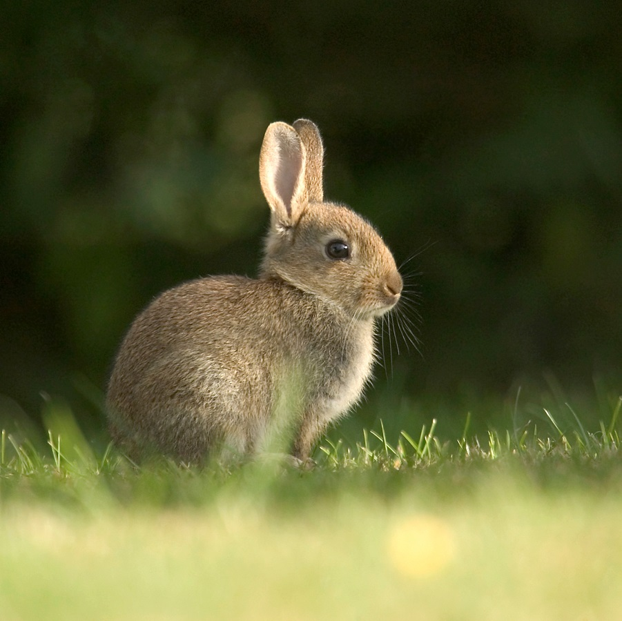 Super La vaccination du lapin - Lapin - Santé - NAC HJ57