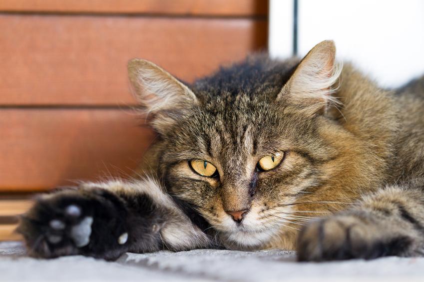 Lire la suite: Comment donner un comprimé à un chat ?