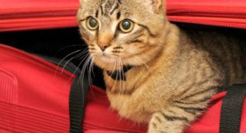 Laisser votre chat lorsque vous partez