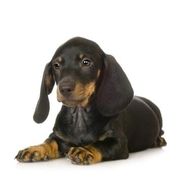 Lire la suite: Laisser votre chien lorsque vous partez