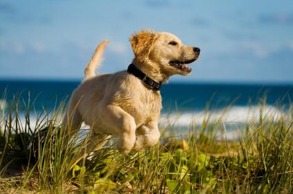 Lire la suite: Les sorties quotidiennes pour votre chien