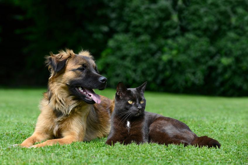 Le régime d'éviction chez le chien et le chat