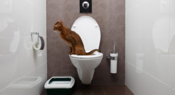 Apprendre à son chat à faire ses besoins dans les toilettes.