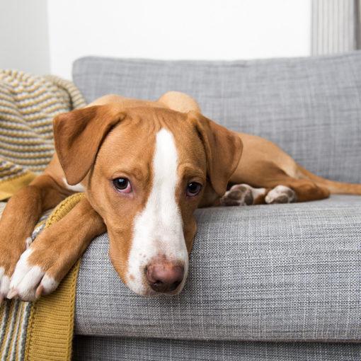 Paraziták žarnaux du chien - Spray nemi szemölcsök kezelésére