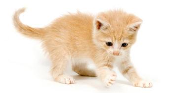 Lire la suite: Mon chaton me mord ou me griffe