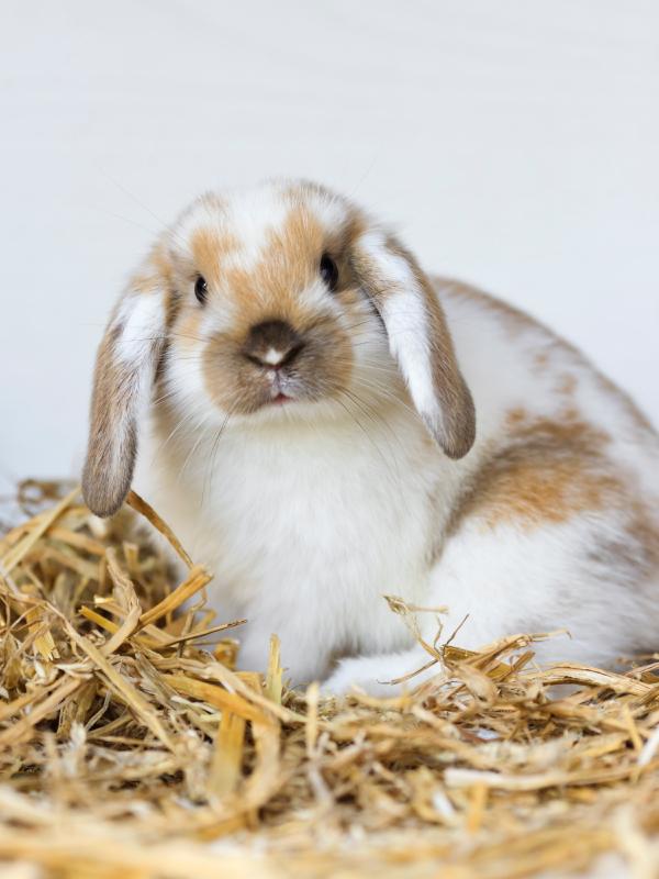Lire la suite: Mon lapin refuse de manger son foin