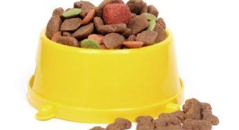 Les glucides dans les croquettes pour chien et chat