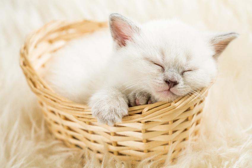 un nom en o pour mon chaton en 2018 nom de chat accueillir un chat chats. Black Bedroom Furniture Sets. Home Design Ideas