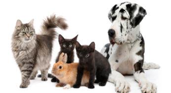Mon animal a t-il de la fièvre ?