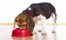 Comment choisir des croquettes de qualité pour son chien ?