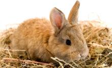 Mon lapin ronge tout, que faire ?