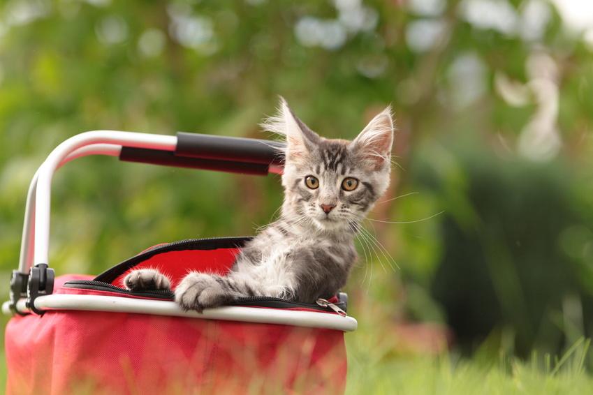 Lire la suite: Est-il nécessaire de faire vacciner son chat tous les ans ?