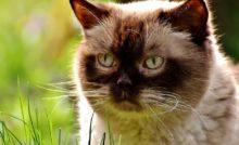 Lire la suite: Mon chat est un glouton