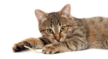 Lire la suite: Mon chat est paralysé