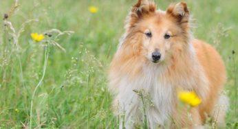 Lire la suite: Mon chien éternue