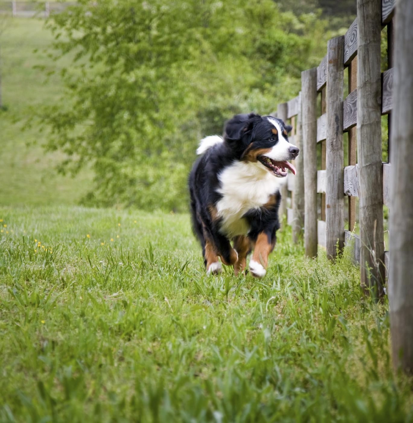Lire la suite: Protéger votre animal du soleil et de la chaleur