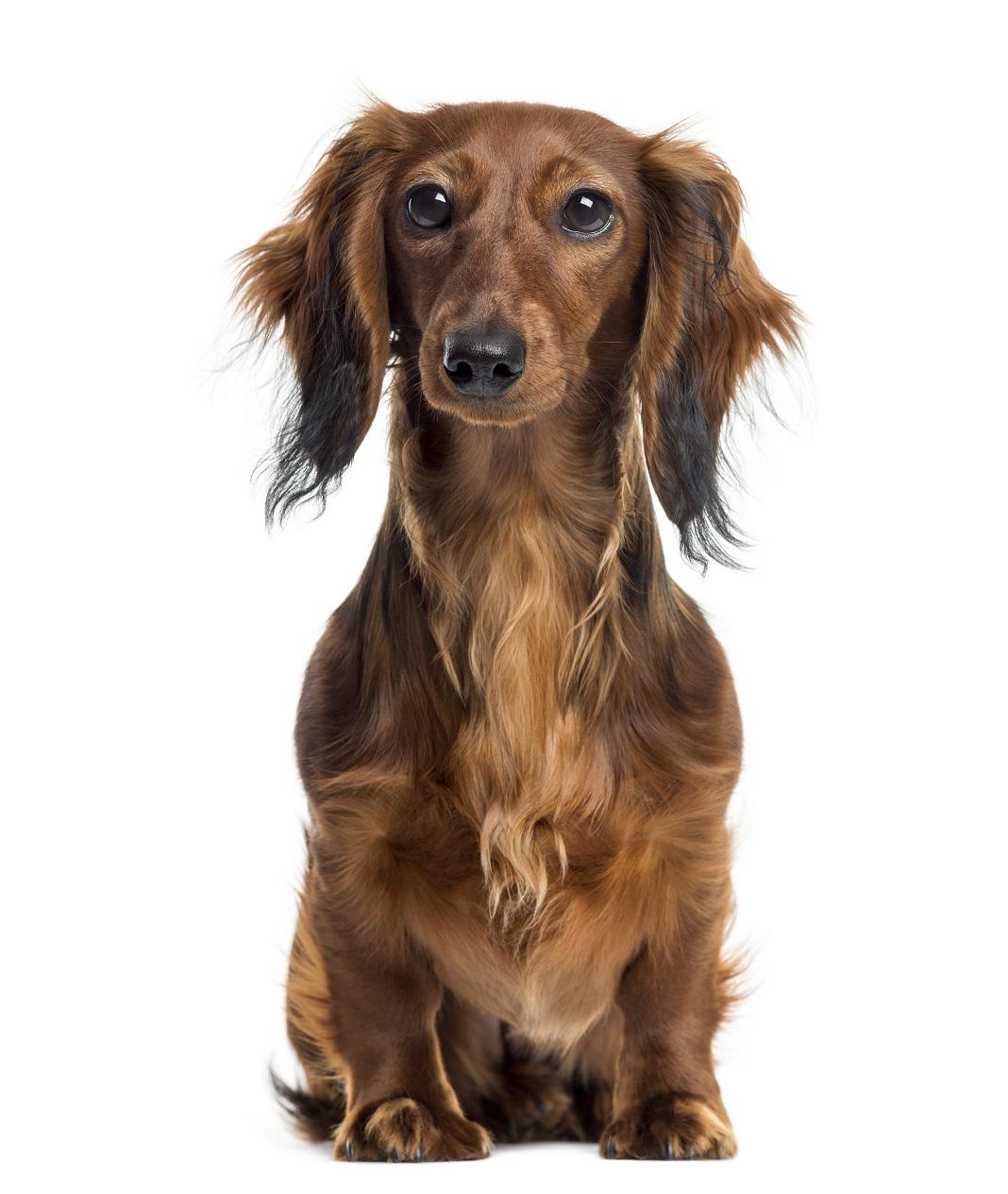 Lire la suite: Mon chien traine son derrière par terre : le signe du traineau