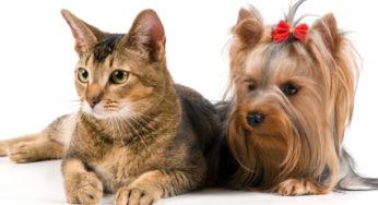 Lire la suite: La cancérologie vétérinaire