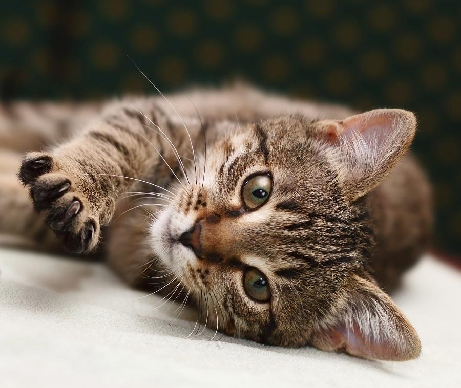 Lire la suite: Quel âge humain a mon chat ?