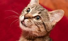 Lire la suite: Pourquoi mon chat bave ?