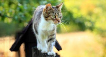 Lire la suite: Les chats errants